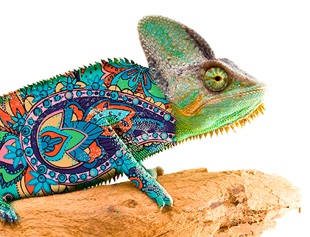 Chameleon perched on a rock with vivid, colorful pattern overlayed